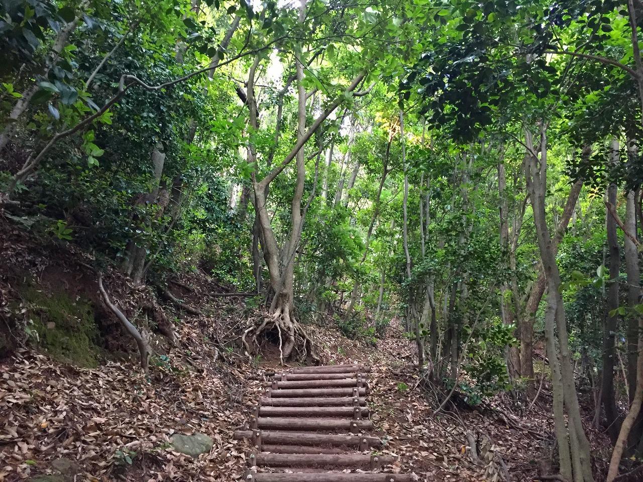 不動岩の上に行く道