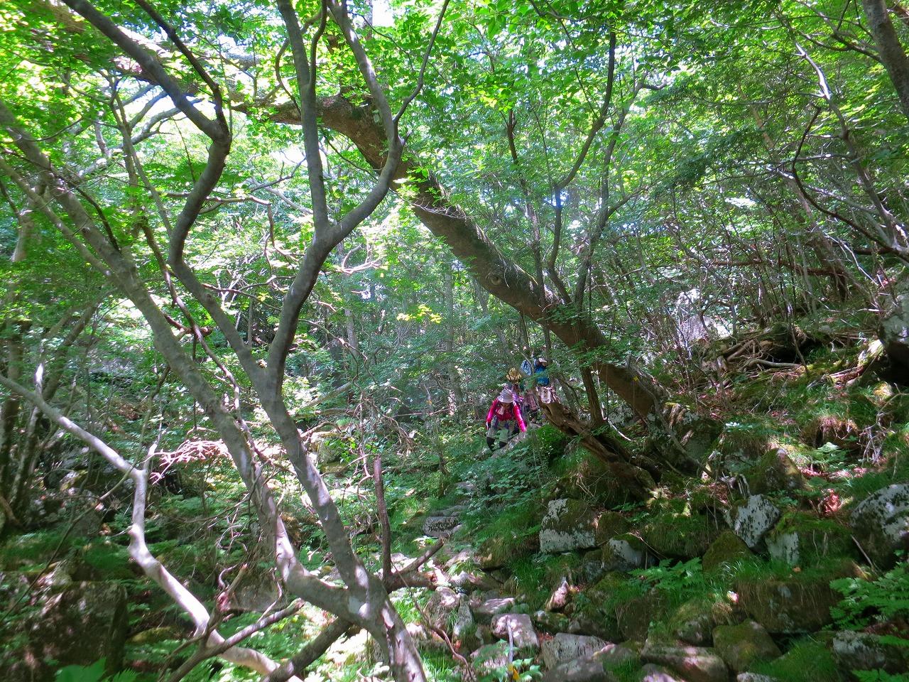 黒岳原生林でリゾットとお抹茶なのだ。その1