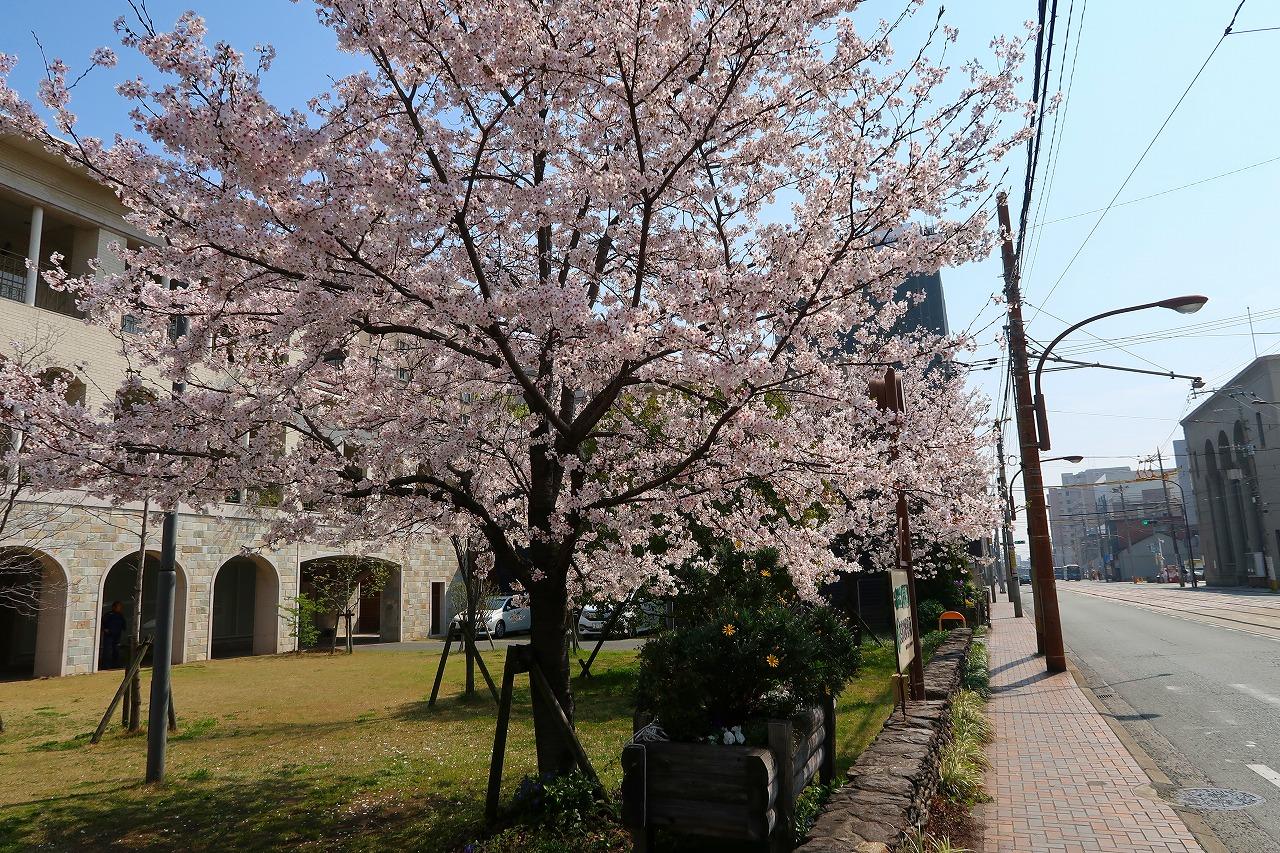 2018.3.27呉服町診療所の桜 満開です。