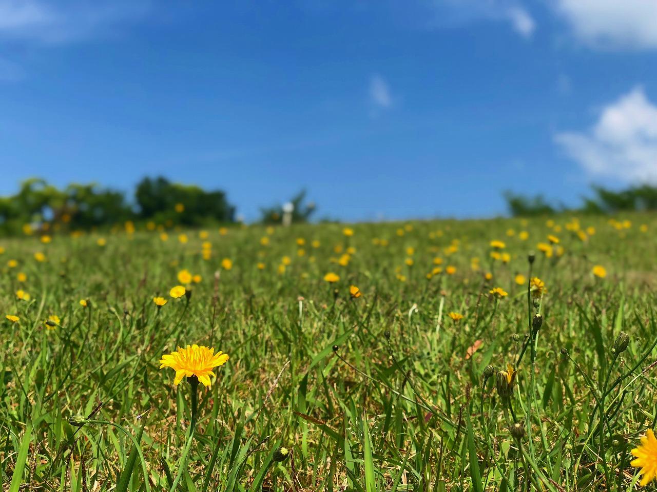独古山の野の花