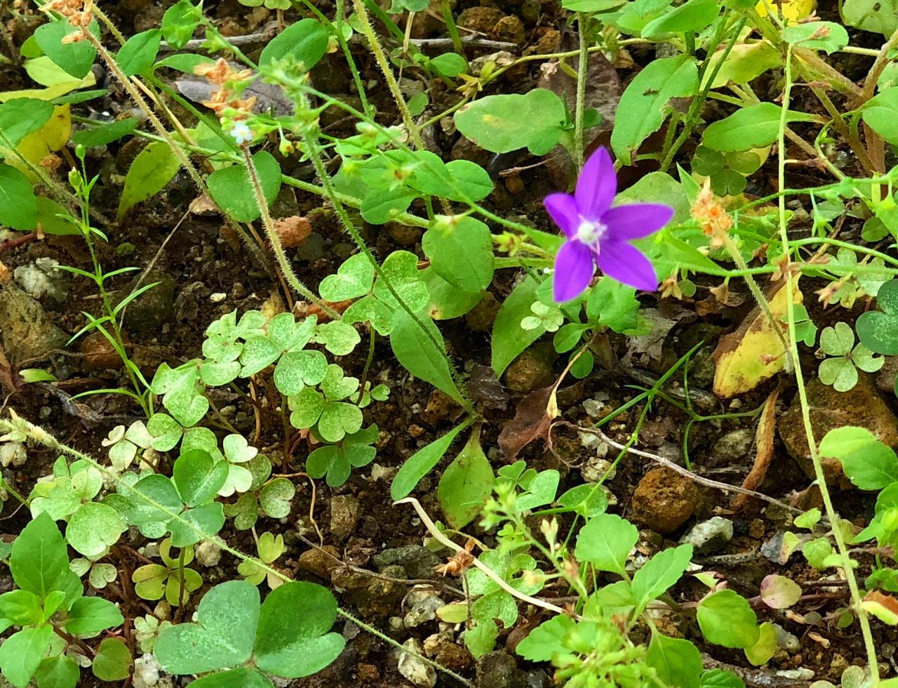 我家の庭に咲いた野の花