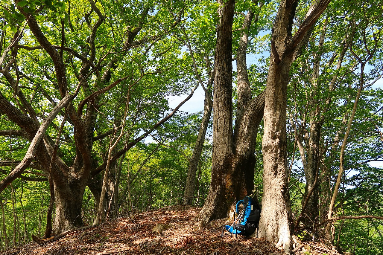 九州脊梁 ブナの木を背もたれにしてコーヒー
