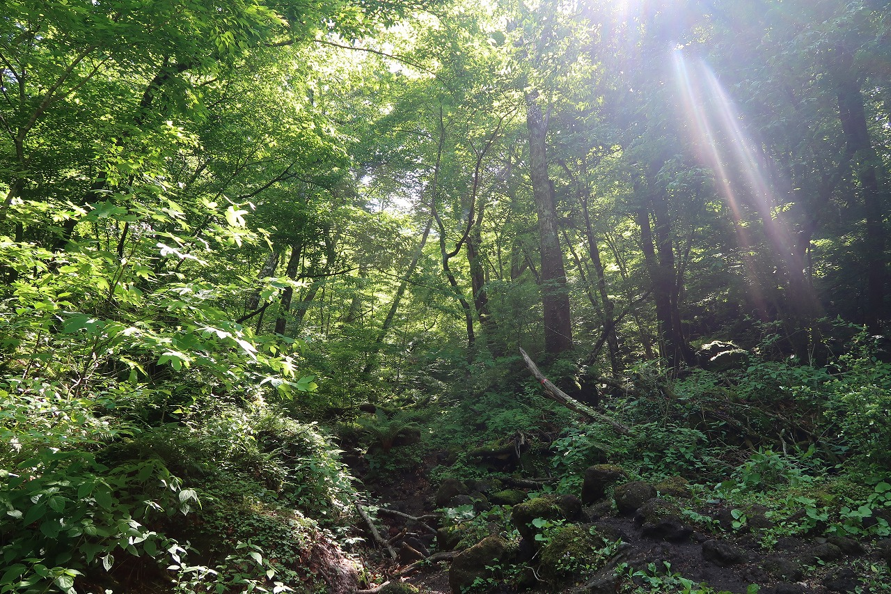 大好きな黒岳の森