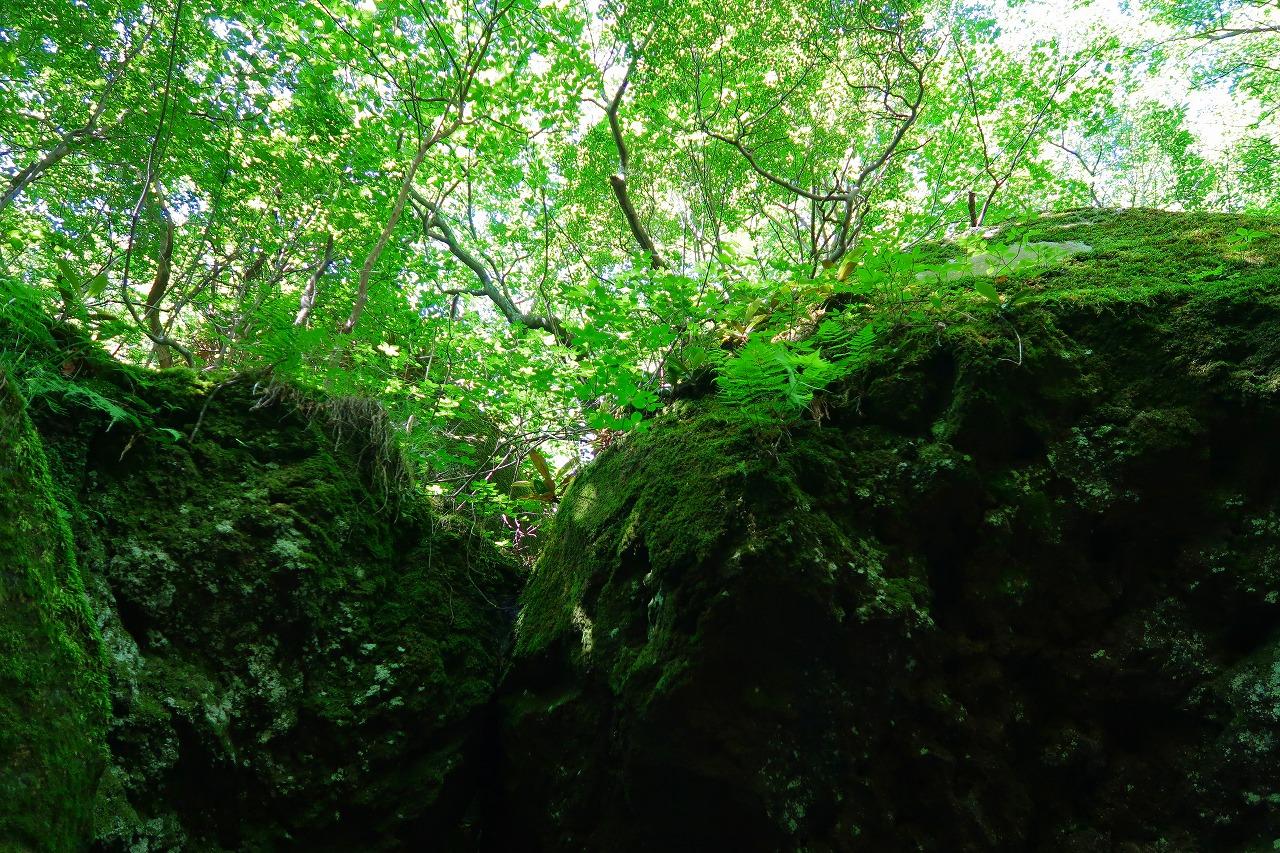 黒岳原生林