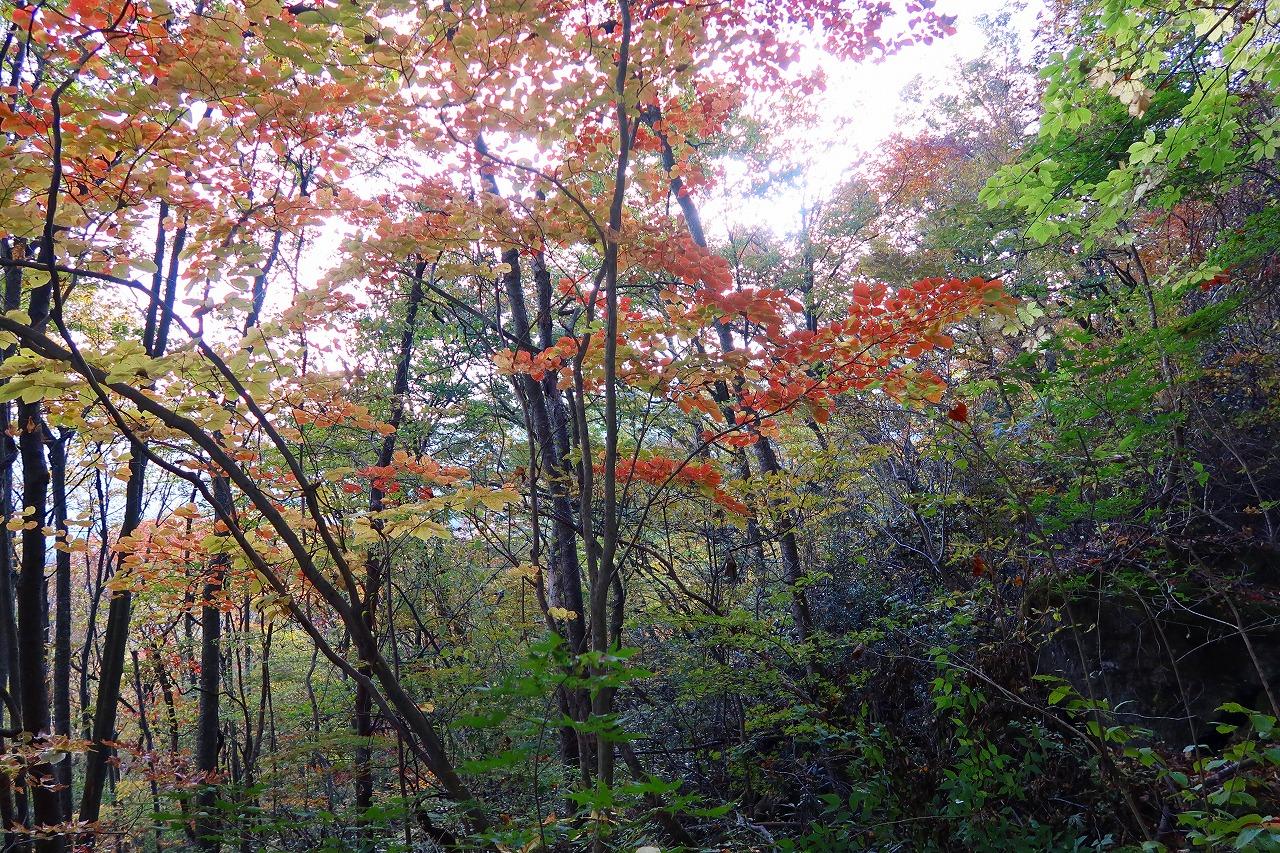 黒岳終わりかけの紅葉