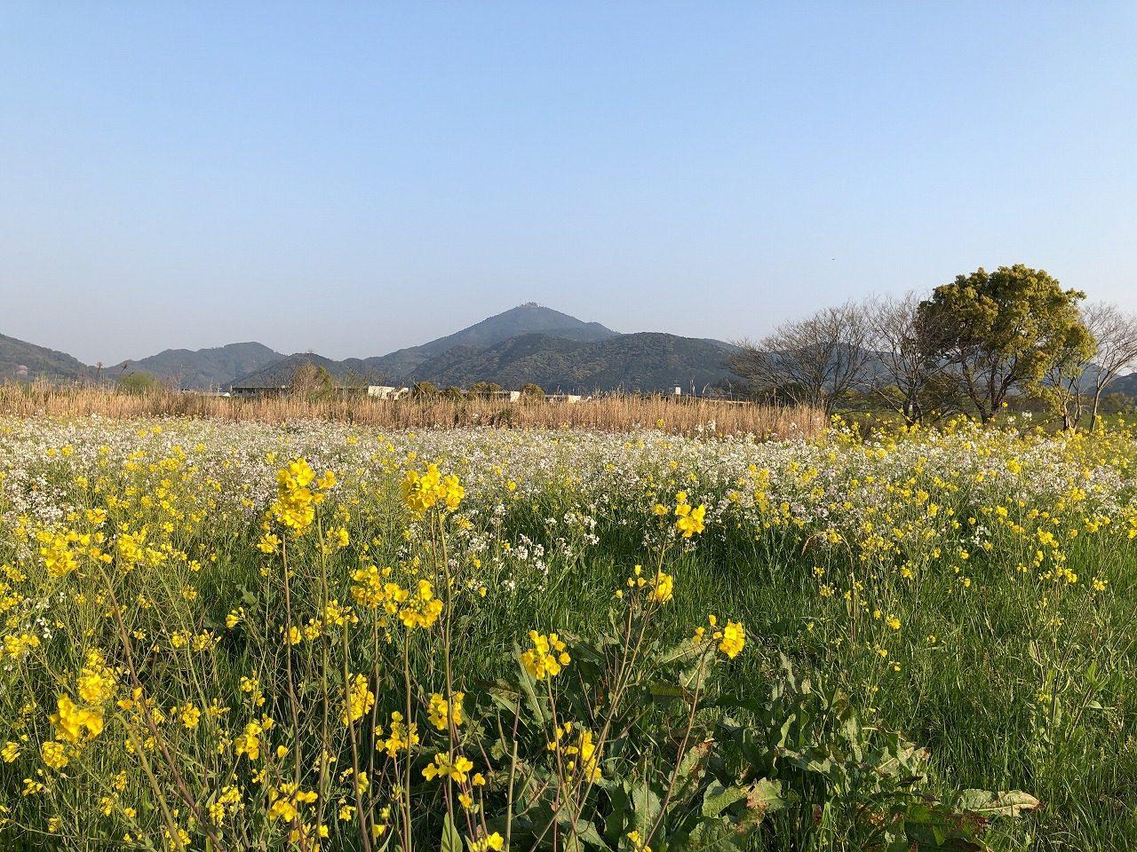 2019.4.2 今朝の金峰山です!